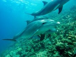 meravigliosi delfini in mare